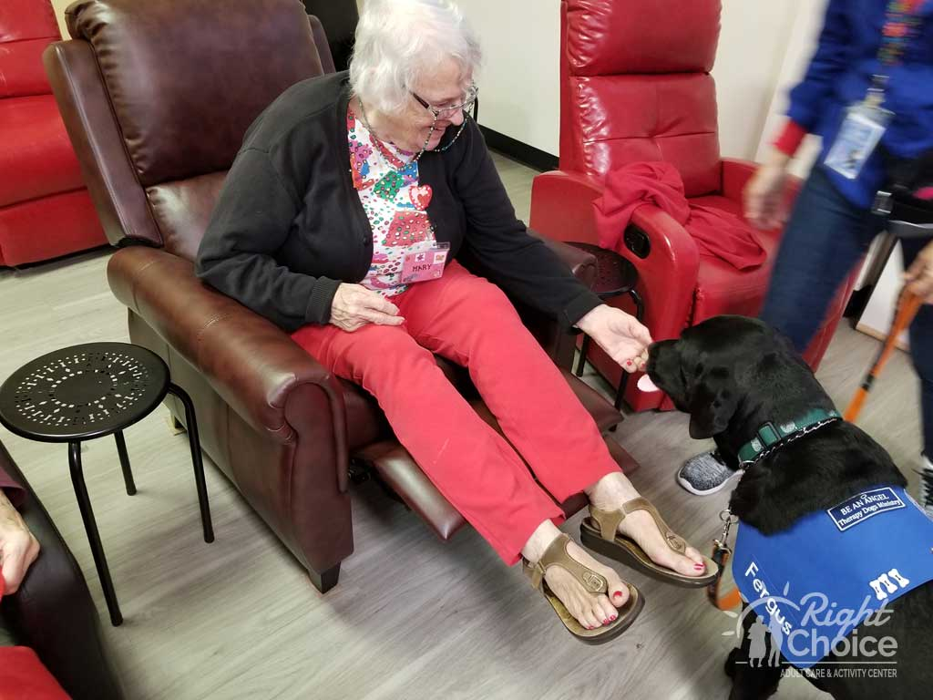 right-choice-pet-therapy